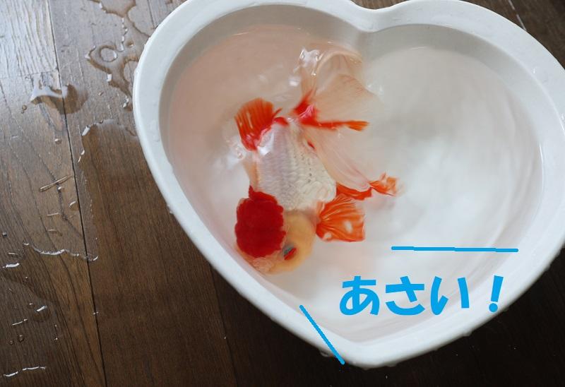 浅い洗面器