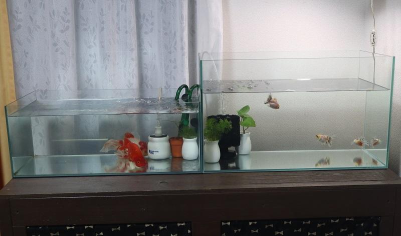 2本の水槽