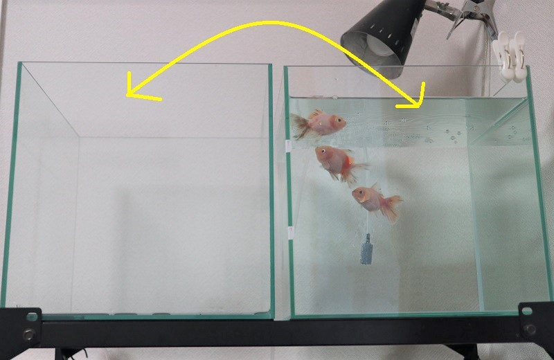 塩浴の水槽