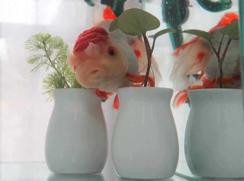 壺を乗り越える金魚